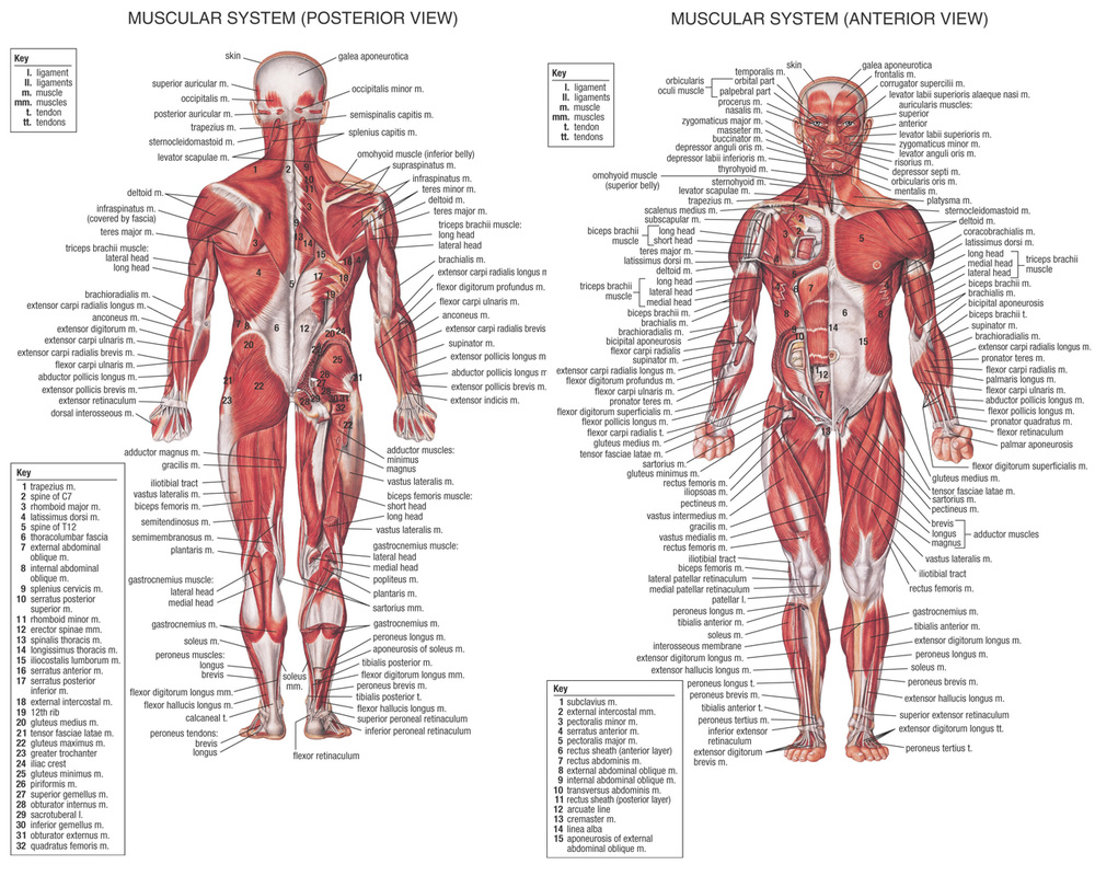 Documentary Human Anatomy And Medicine Russell Donos Site
